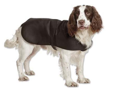 Should Your Dog Wear A Winter Coat Sandra S Town Amp Country