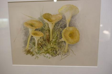 Beatrix muschroom painting at Arnitt